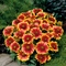 Gaillardia 'Arizona Sun' (063369)