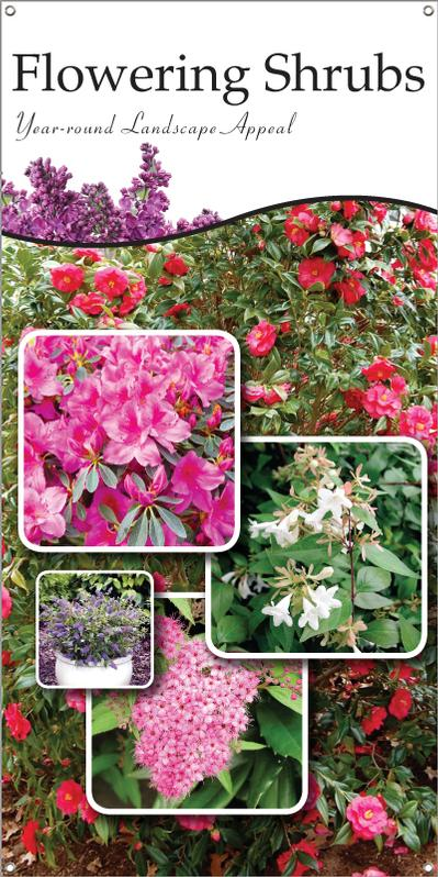 Flowering Shrubs 18