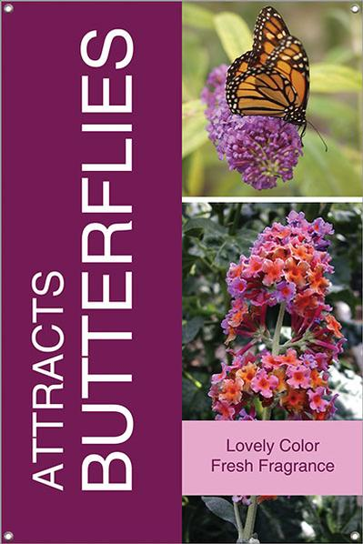 Attracts Butterflies 24