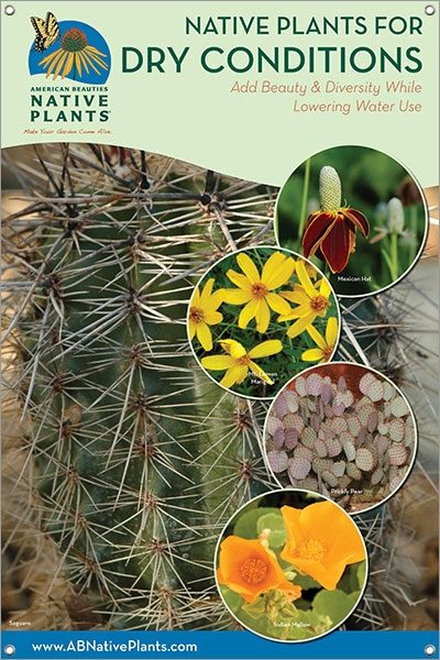 Native Plants for Dry Conditions-SOUTHWEST 24