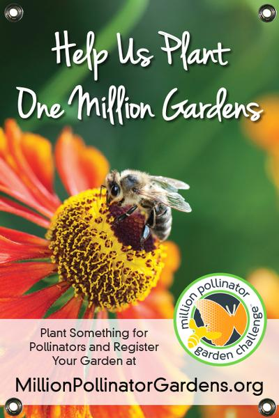 MPGC: Bee on Helenium 24