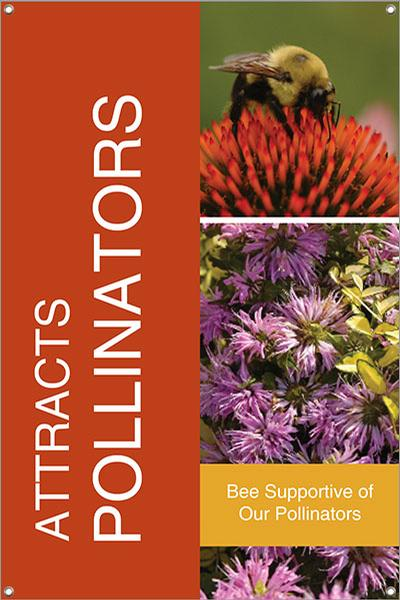 Attracts Pollinators 24