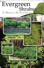 Evergreen Shrubs 24