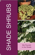 Shade Shrubs 24