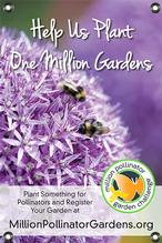 MPGC: Bees on Allium 24