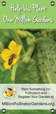 Bee on Cucumber 18