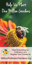 MPGC: Bee on Helenium 18