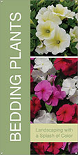 Bedding Plants 18