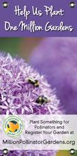 MPGC: Bees on Allium 18