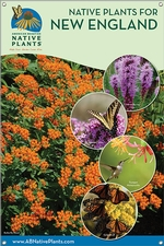 Native Plants for New England 24