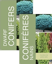Dwarf Conifers/Conifères nains 24