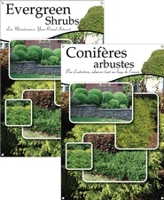 Evergreen Shrubs/Conifères arbustes 24