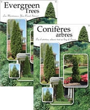 Evergreen Trees/Conifères arbres 24