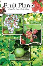 Fruit Plants 24