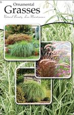 Ornamental Grasses 24